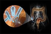 колонизация слизистой оболочки желудка